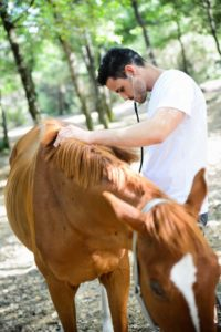 How To Be A Doula For Your Farm Animals Healthy Farms